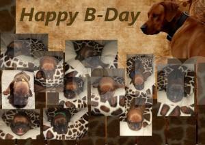 2.Bildmontage für rhodesian ridgeback-bb.de, Geburtstag der Rassehunde Nachzucht von Bandele Bathani