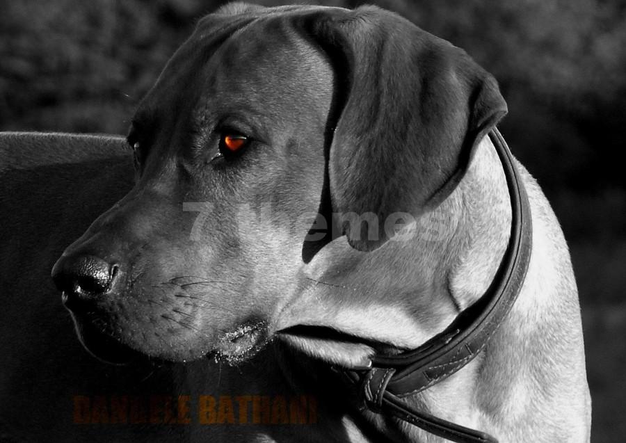 Colorkey-Effekt-7Themes.de /Bildbearbeitung für Websites Homepage Header , Bilder Fotos günstig kaufen für Homepage Website